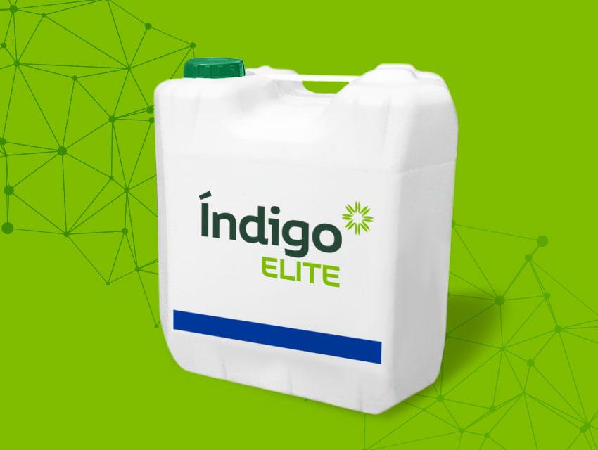 Indigo Elite