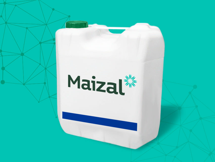 Maizal